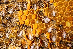 Pollen et miel