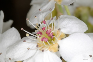 Fleur de .......